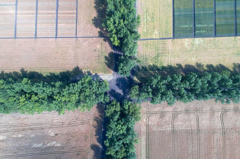 Россия, Воронежская область, поля, тополя, коптер, дрон, аэро 4 АЛЛЕИphoto preview