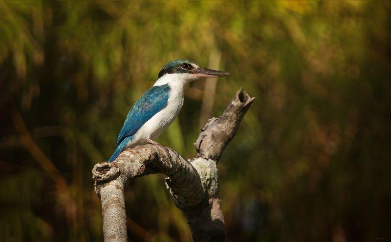 природа, животные, птицы, индонезия Охотникphoto preview