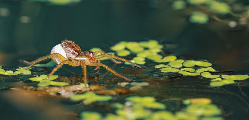 паук,лист,зелень,трава,свет,лапы Все свое, беру с собой !photo preview
