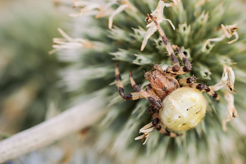 паук,лист,зелень,трава,свет,лапы Контраст шиповphoto preview