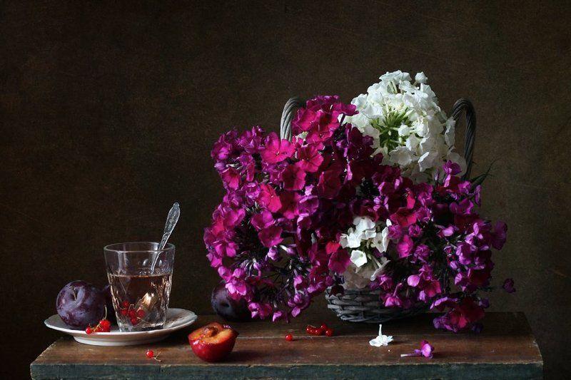 натюрморт, цветы, флоксы, ягоды, смородина, слива С флоксамиphoto preview