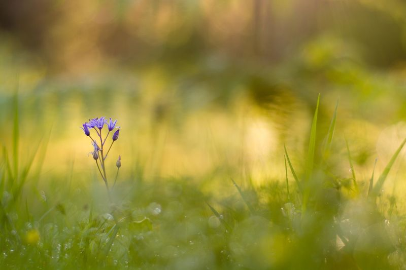 fragile, color, beauty, nature, small, purple Fragilephoto preview