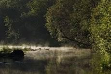 у утренней реки