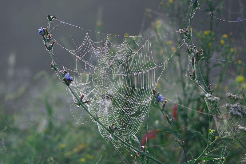 паук,лист,зелень,трава,свет,лапы Заброшенные сетиphoto preview