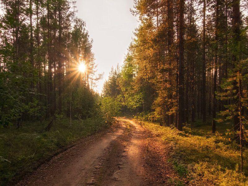 печора,коми,север,закат,август Лесная дорогаphoto preview