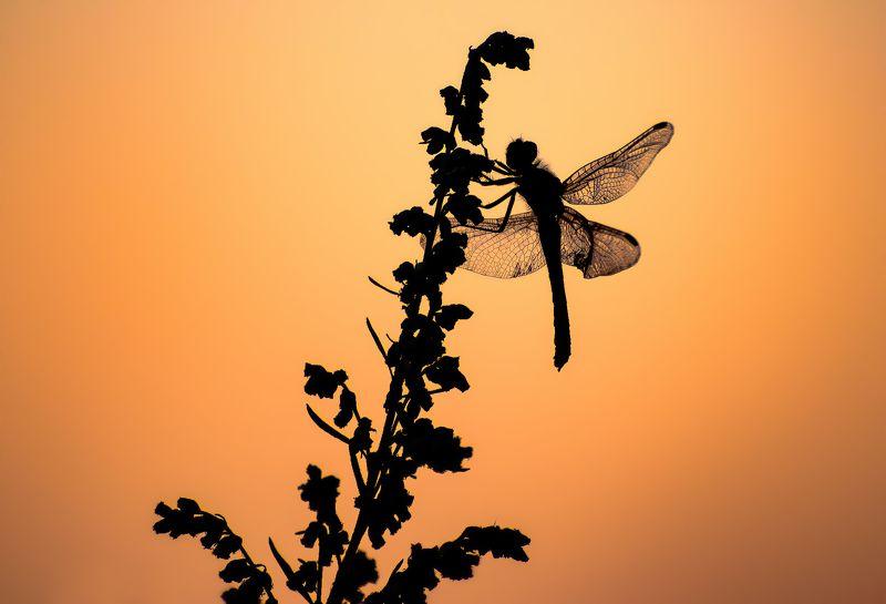 поле, закат, прогулка, цветы Силуэты закатаphoto preview