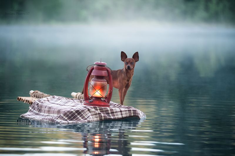 Туманным утром, проплывая по реке..photo preview