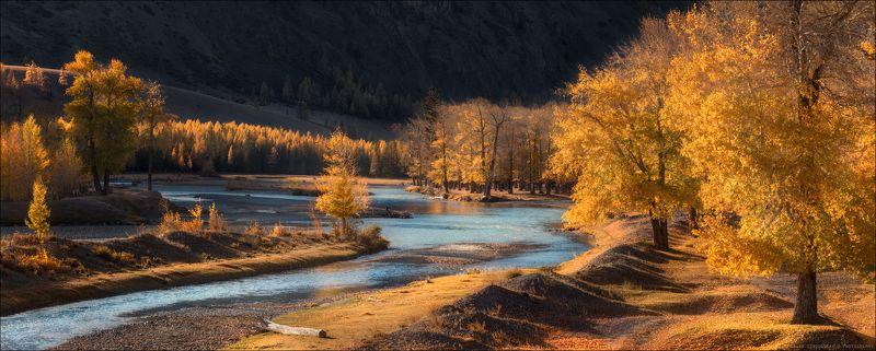 Алтай, горы, осень, река, Чуя, Курайская степь, золото, тополь, Золото Алтаяphoto preview