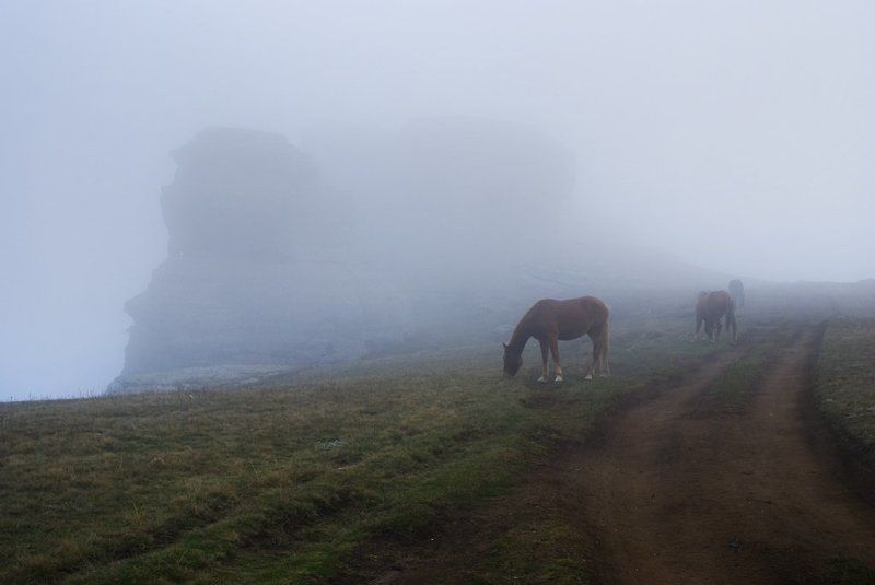 Лошади в облаках...photo preview