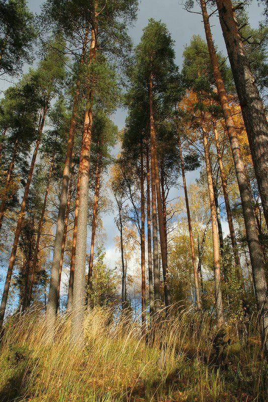 Осенний пригорокphoto preview