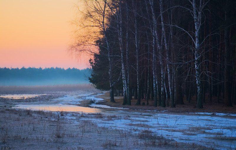 Рассвет в березовой роще. Март.photo preview