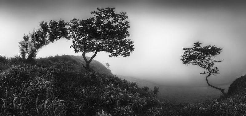 панорама, утро, туман ***photo preview