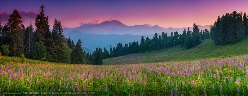 кипрей, иван-чай, кавказ, природа, пейзаж, панорама, лето, цветы, горы, поляна, заповедник Кипрея цвет.photo preview