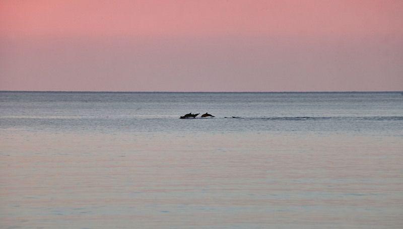 Дельфины. Утро. Сочиphoto preview