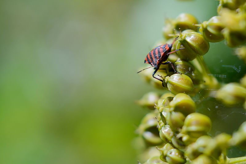 insect, red, small, green, litlle, bokeh, background, macro Watching youphoto preview