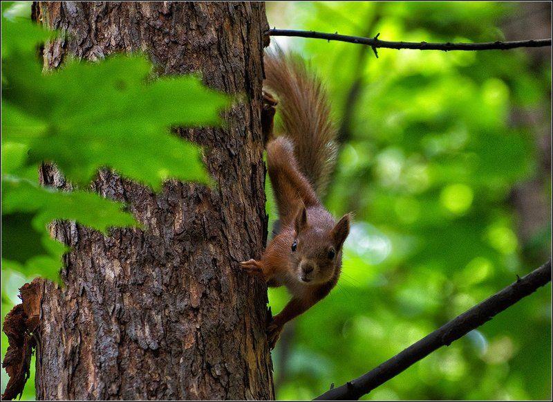 лето, лес, белки PRO БЕЛОКphoto preview