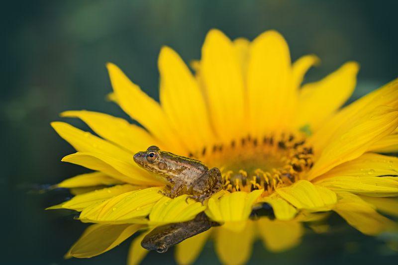 листья, ветки, осень, свет, блик, деревья,лягушка,глаз,цветок Королевна на тронеphoto preview