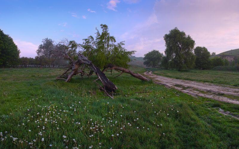 morning, panorama, road, sunrise, деревья, дорога, одуванчики, панорама, поляна, рассвет, Утро, холмы, trees, countryside Утро на полянке с одуванчиками :)photo preview