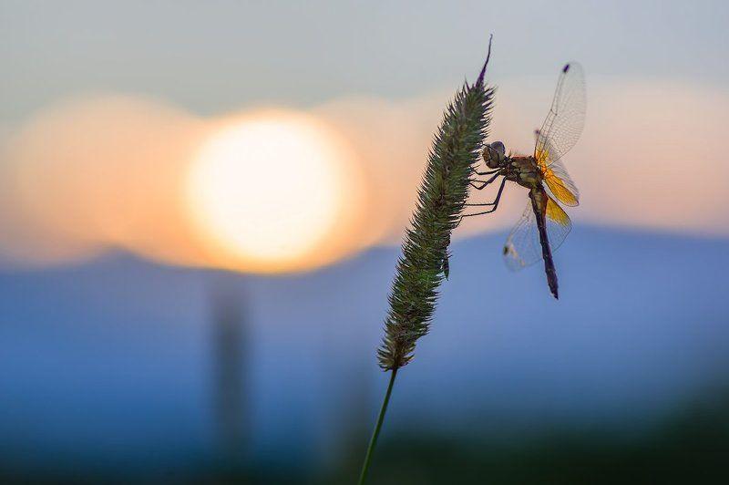 стрекоза солнце трава небо Вечерphoto preview