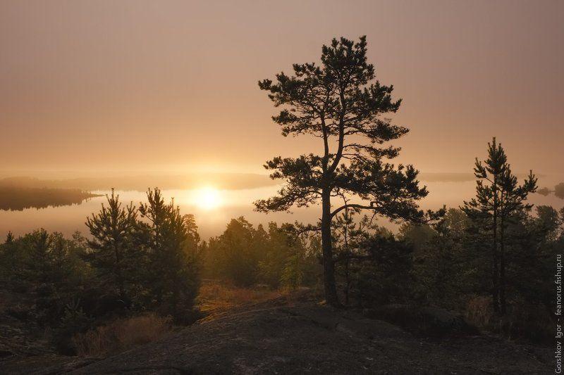 ладога,пейзаж,природа,утро,рассвет,гора,берег,россия,озеро,туман Обратное солнцеphoto preview