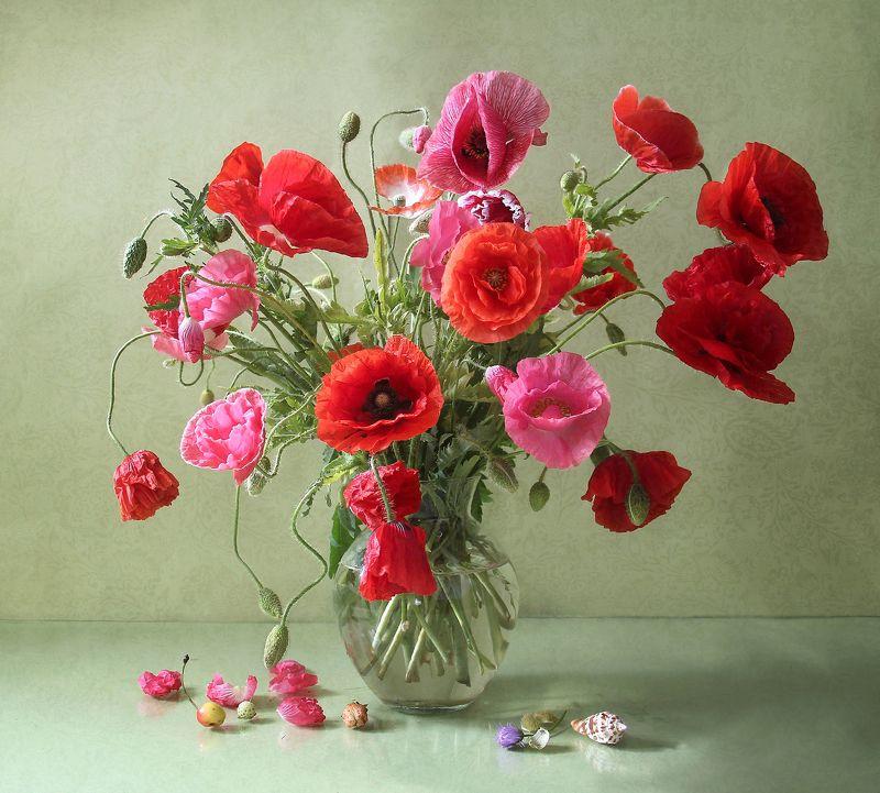 натюрморт, цветы, марина филатова, маки Маковый полденьphoto preview