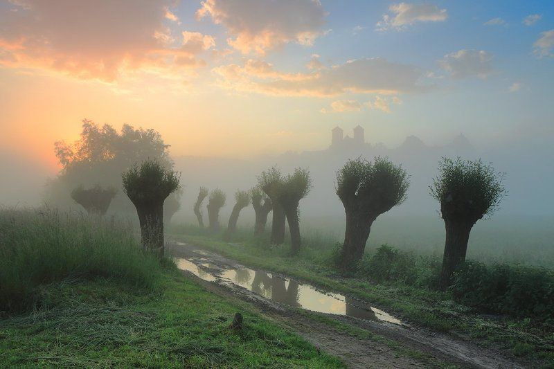 summer, morning, sunrise, mood, willows, tyniec, fog, light Summer morningphoto preview