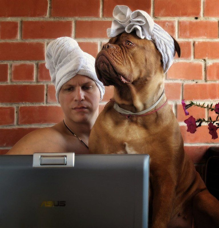 бордоский дог, собака, полотенца, юмор, утро, занятие, настроение, позитив Утро доброе!photo preview