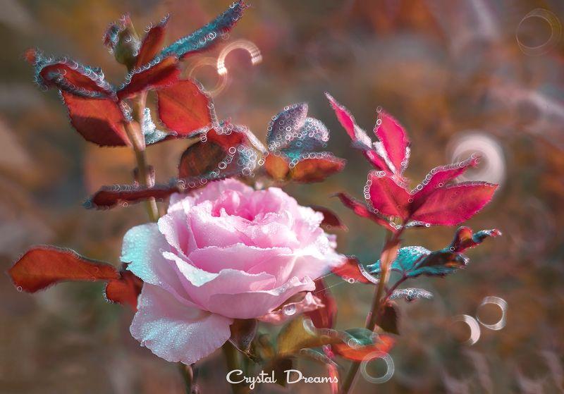 crystal dreams, macro, summer, color, art, nature, flowers \