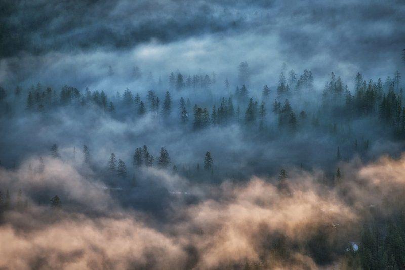 якутия, индигирка Якутия. Лесные призраки.photo preview