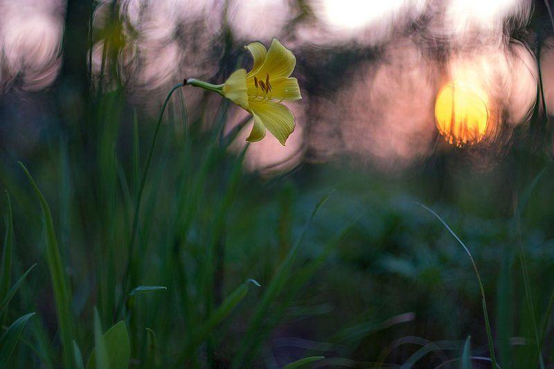 Этюд с желтой лилиейphoto preview
