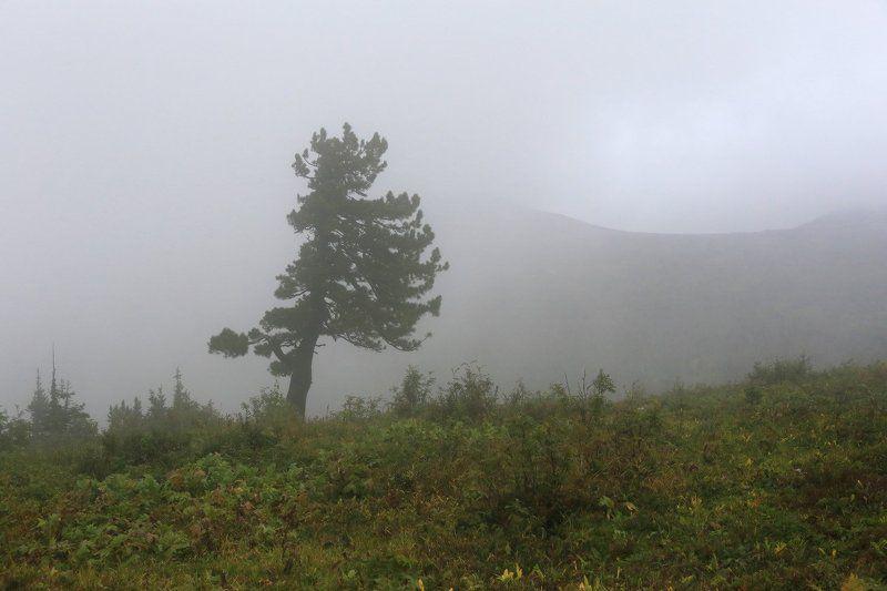 Дождливый августphoto preview