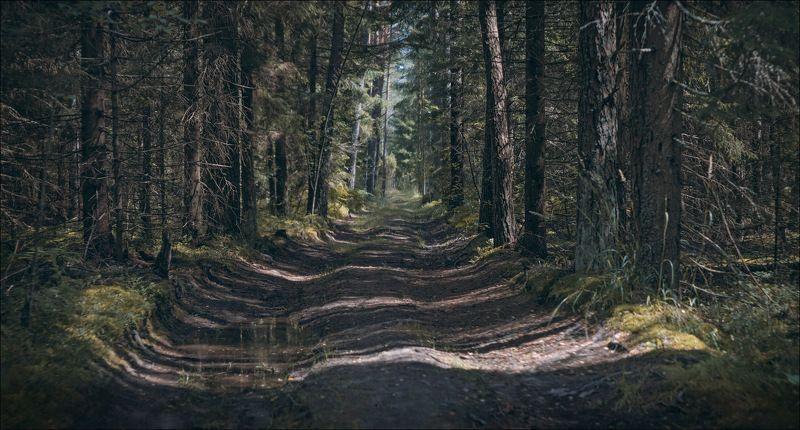 лес, лето, дорога, Контрасты лесаphoto preview