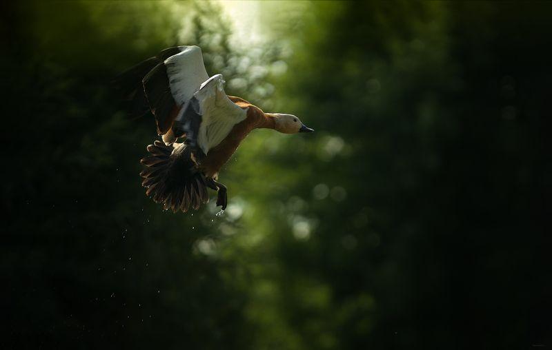 природа, лес, животные, птицы В полетphoto preview