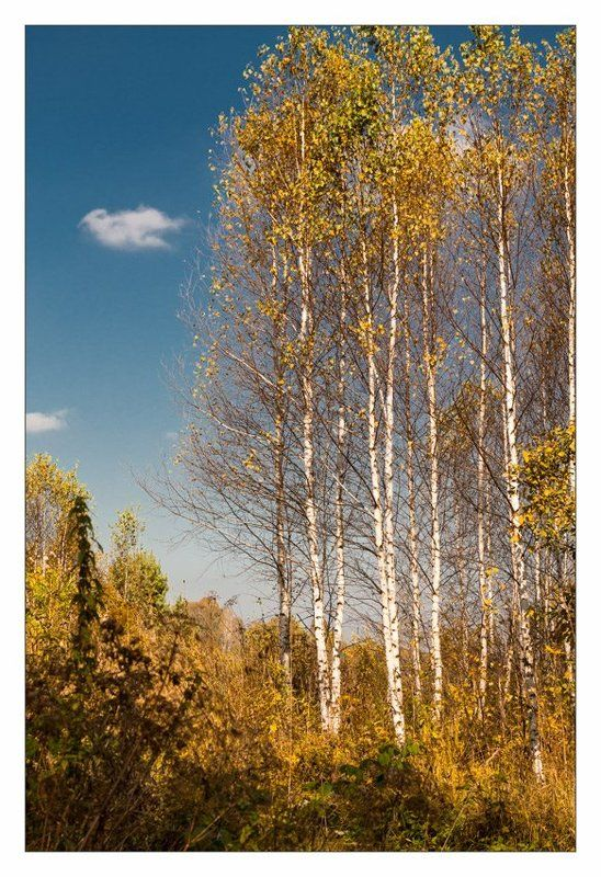 осень, сентябрь Первый день осени...photo preview