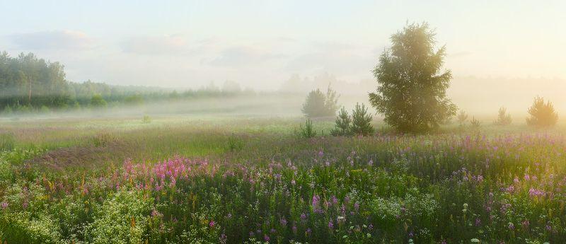 иван-чай туман июль утро Пора цветения иван-чаяphoto preview