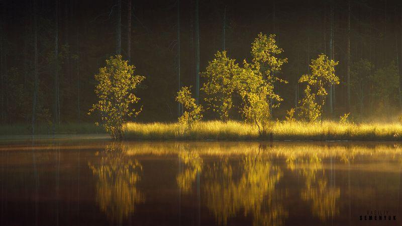 карелия, озеро, закат, деревья, объемный свет, плавни. Карельское золото.photo preview