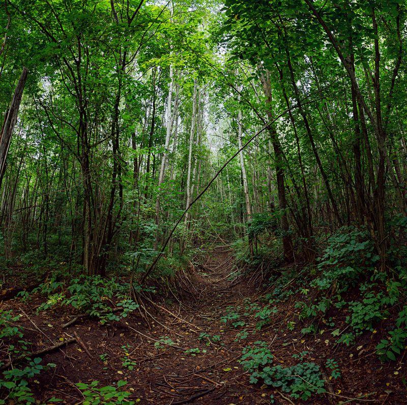 деревья,лес,листва,ветки,лианы,лист,свет,зелень Джунгли Россииphoto preview