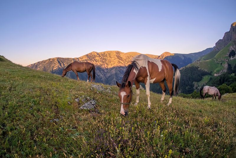 horses in the mountainphoto preview