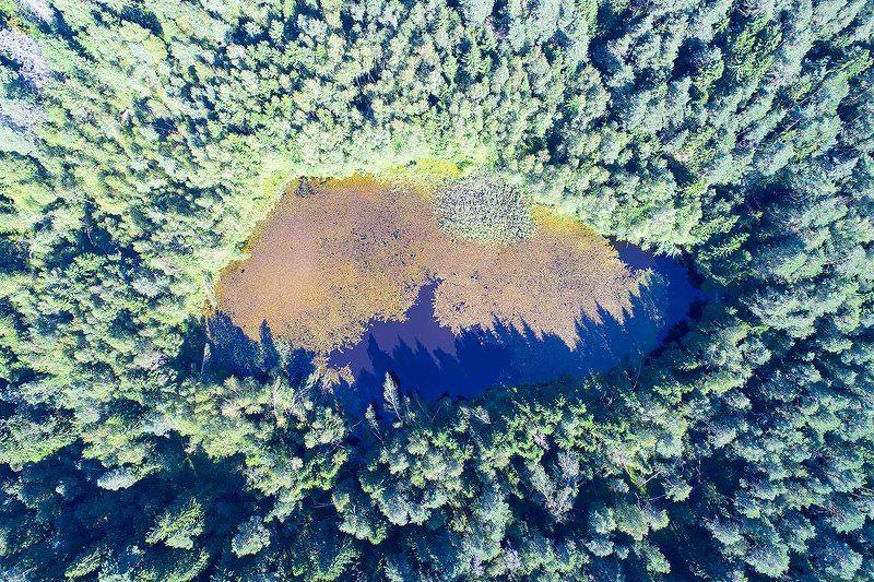 Россия, Московская область, лес, озеро, аэро, дрон, коптер, aerial, air Лесной глазphoto preview