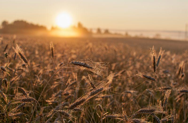 summer,fields,sunrise Summer morningphoto preview