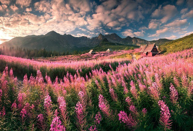 Tatra\'s Flowersphoto preview
