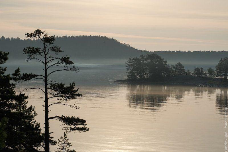 ладога,пейзаж,природа,утро,рассвет,гора,берег,россия,озеро,туман Утро на Ладогеphoto preview