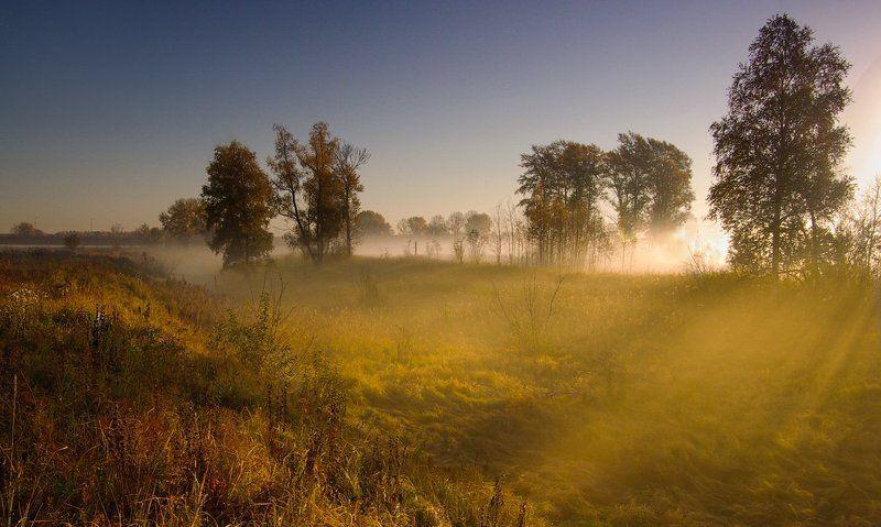 осень, утро, рассвет, туман, деревья, листья, трава, желтые, лес Свет сентябряphoto preview