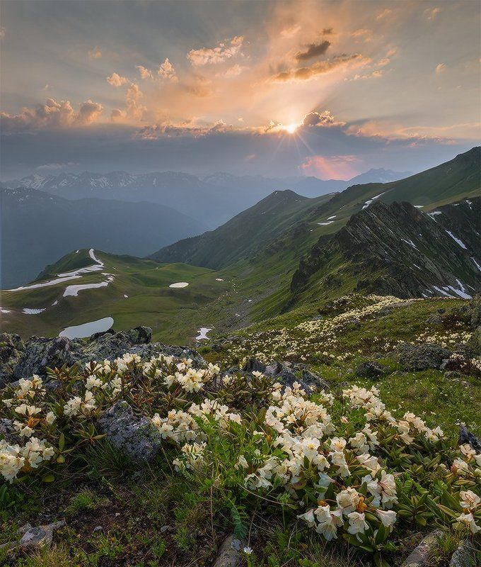 западный кавказ пхия пятиозёрье рододендроны закат лето Провожая день хорошийphoto preview