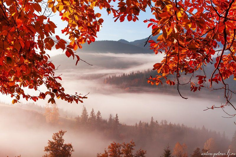 рассвет, туман, карпаты, горы, осень Окно в осеньphoto preview