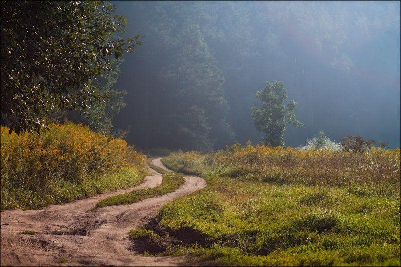 лето, лес, утро, Дорога в дымкуphoto preview