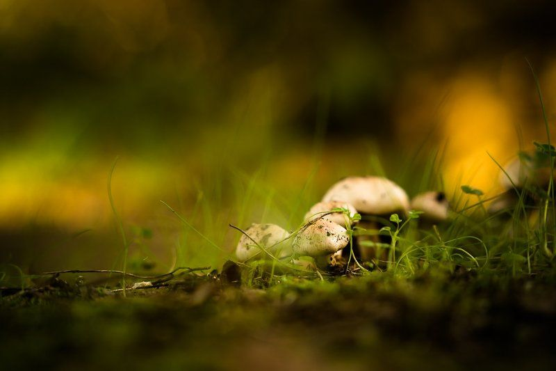 mushroom, nature, ground, grass, грибы, природа, земля, трава Togetherphoto preview