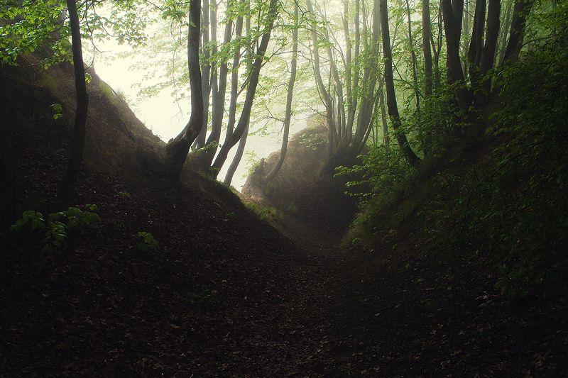 Брянск, Хотылево,утро, туман, май, рассвет,Алексей Платонов Майским утром.photo preview