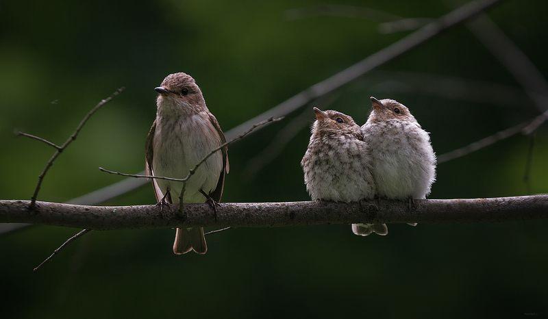 природа, лес, животные, птицы Семейкаphoto preview