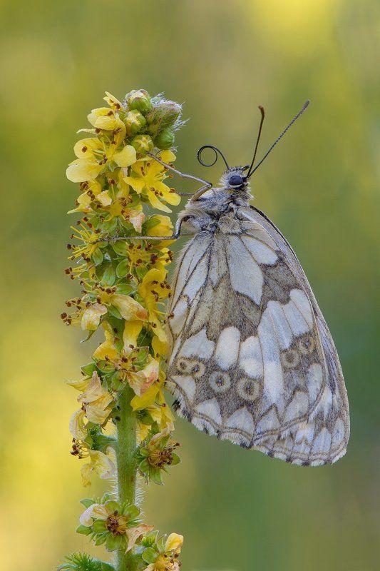 бабочка утромphoto preview